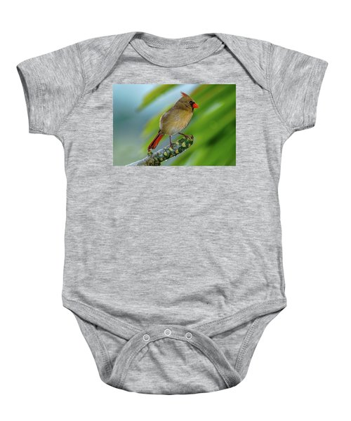 Baby Onesie featuring the photograph Female Cardinal by John Bauer