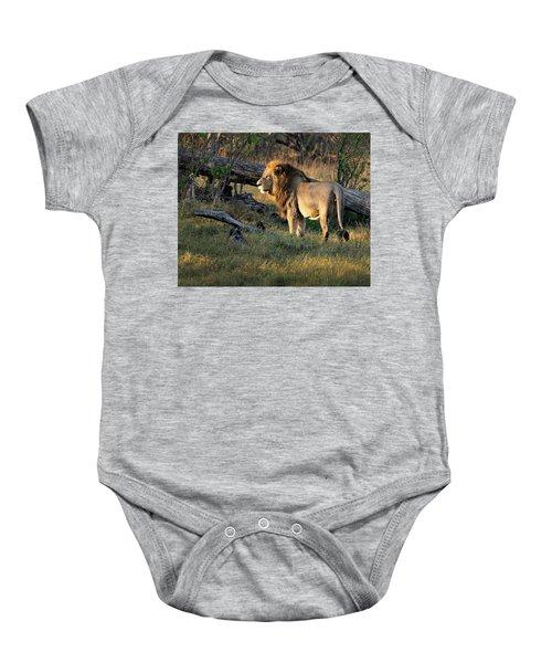 Male Lion In Botswana Baby Onesie
