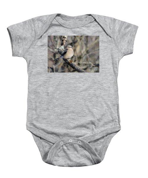Northern Shrike Baby Onesie