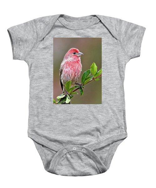 Purple Finch Baby Onesie