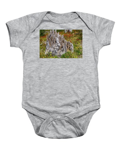 Stumps Of Trees Shattered In The 1980 Eruption Baby Onesie