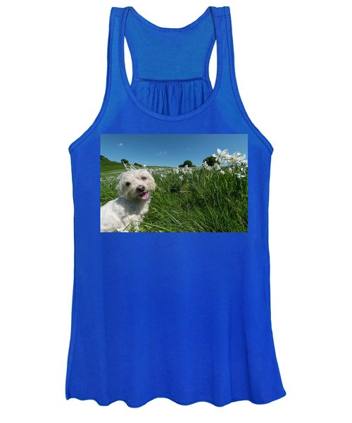 Blooming Daffodils In The Antola Park With Maltese II Women's Tank Top
