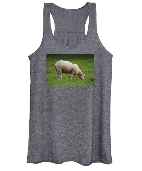 Grazing Sheep Women's Tank Top