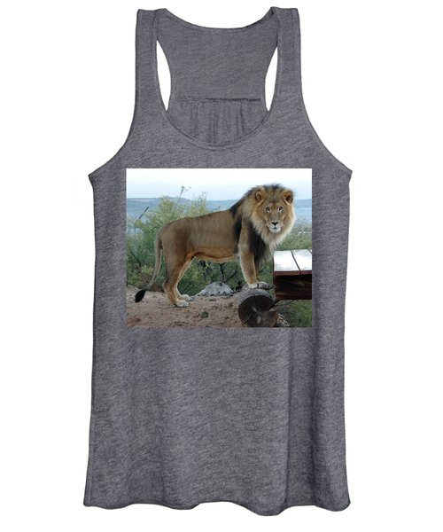 Out Of Africa  Lion 1 Women's Tank Top
