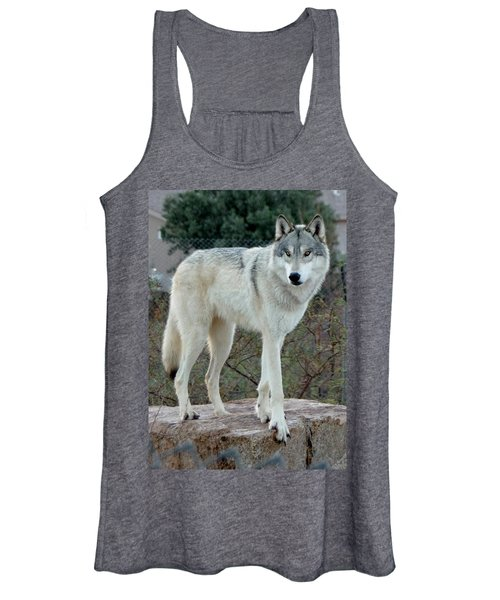 Out Of Africa Wolf  Women's Tank Top