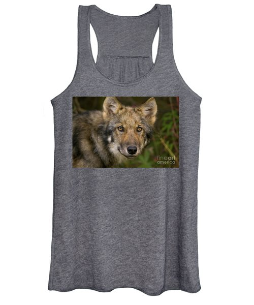Timber Wolf In Denali Women's Tank Top