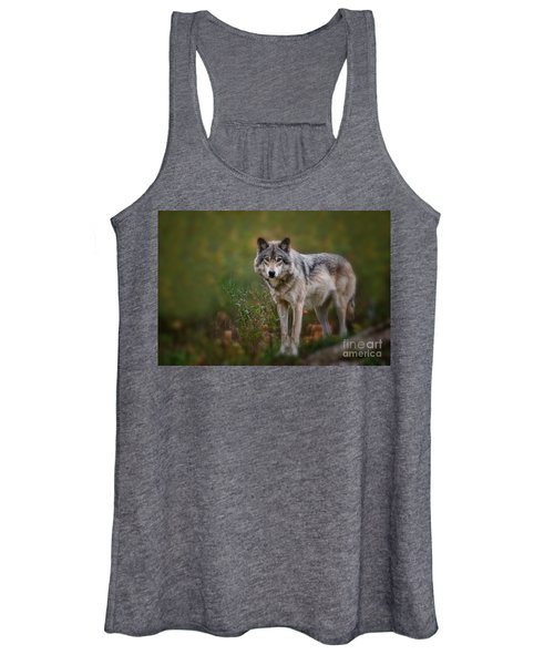 Timber Wolf Pictures 401 Women's Tank Top