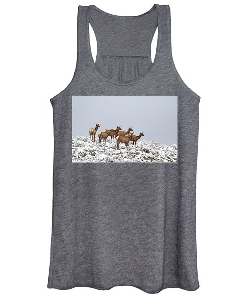 Elk Cows On The Alert In The Tetons Women's Tank Top