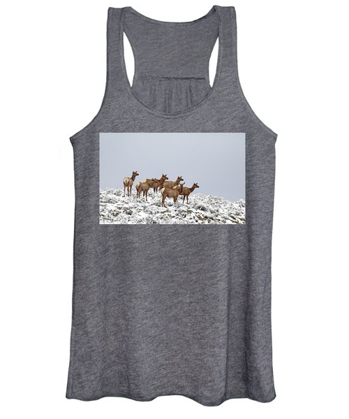 Elk Cows On The Alert In The Tetons Women's Tank Top