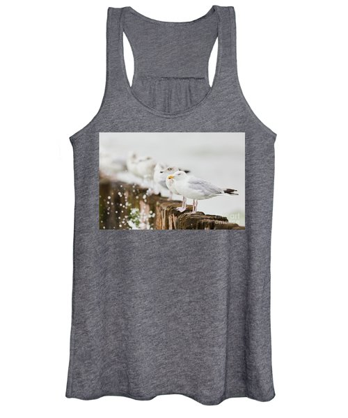 European Herring Gulls In A Row  Women's Tank Top