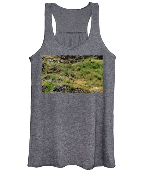 Grazing Bighorn Sheep Women's Tank Top