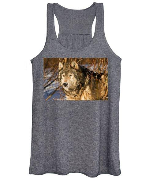 Wolf In Brush Women's Tank Top