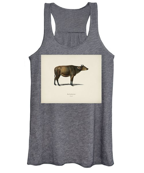 Cow  Bos Brachyceros  Illustrated By Charles Dessalines D' Orbigny  1806-1876  Women's Tank Top