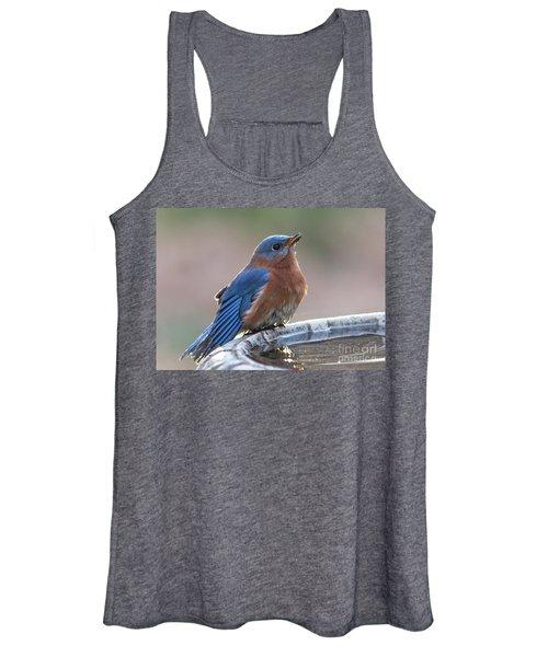 Male Eastern Blue Bird Women's Tank Top