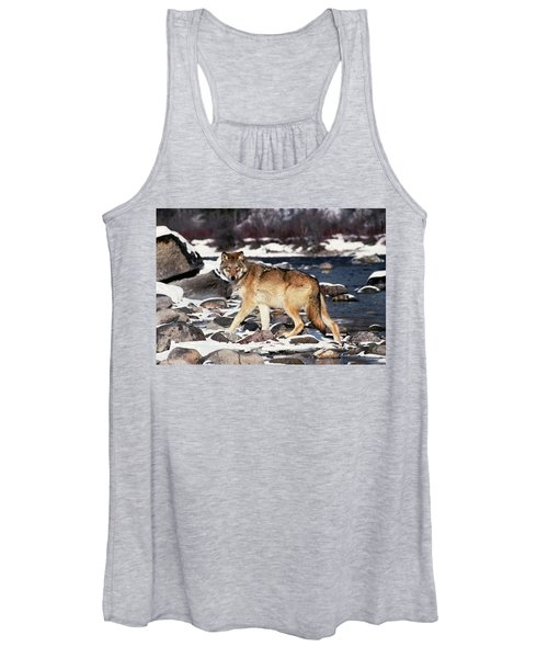 Gray Wolf Canis Lupus By Winter Stream Women's Tank Top