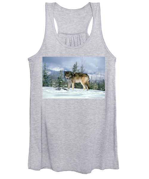 Gray Wolf Canis Lupus In Winter Snow Women's Tank Top