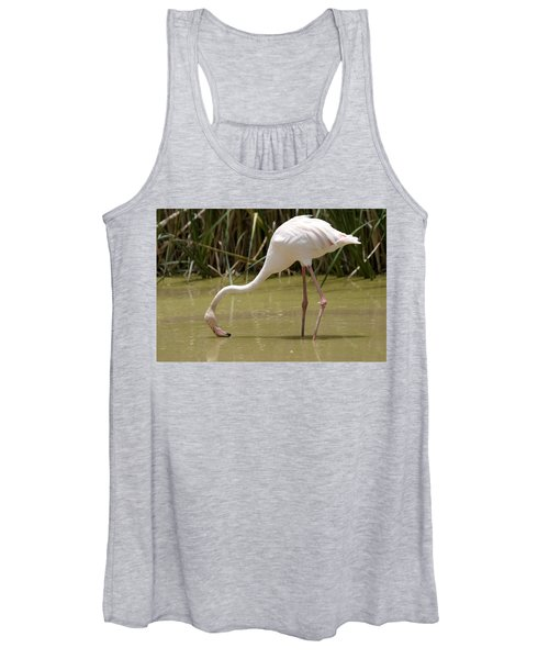 Greater Flamingo Feeding Women's Tank Top