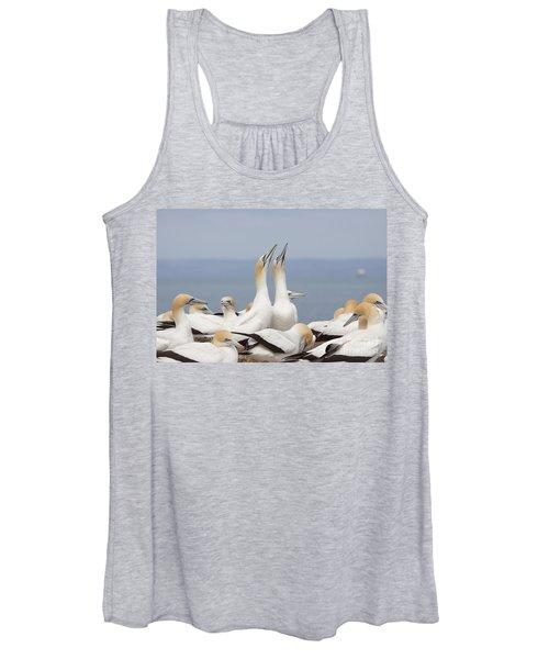 Australasian Gannets Courting Women's Tank Top