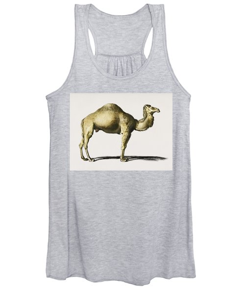 Camel  Camelus  Illustrated By Charles Dessalines D' Orbigny  1806-1876  Women's Tank Top