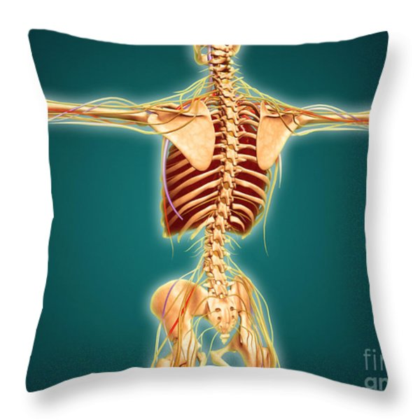 Back View Of Human Skeleton Throw Pillow by Stocktrek Images
