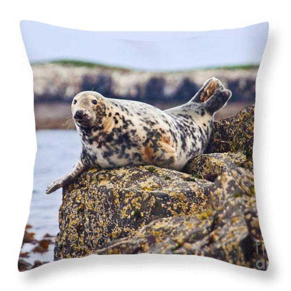 Atlantic Grey Seal Halichoerus Grypus Throw Pillow by Liz Leyden