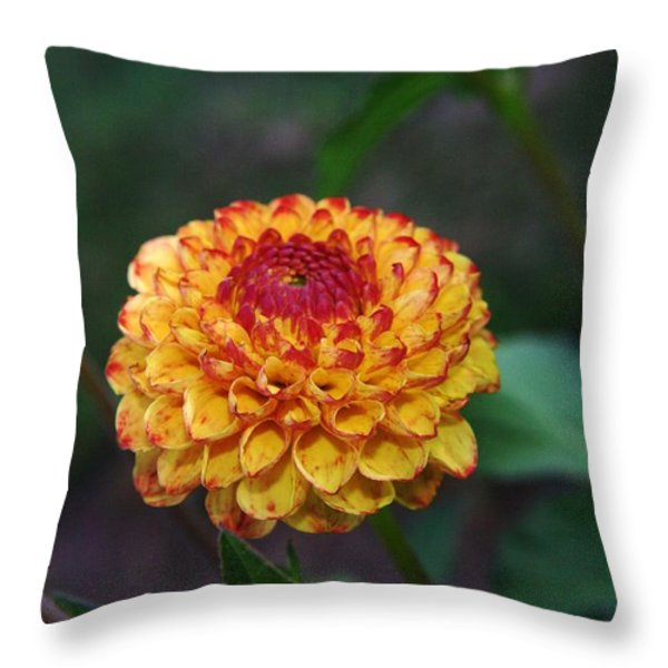 Dahlia Throw Pillow by Jeff Swan