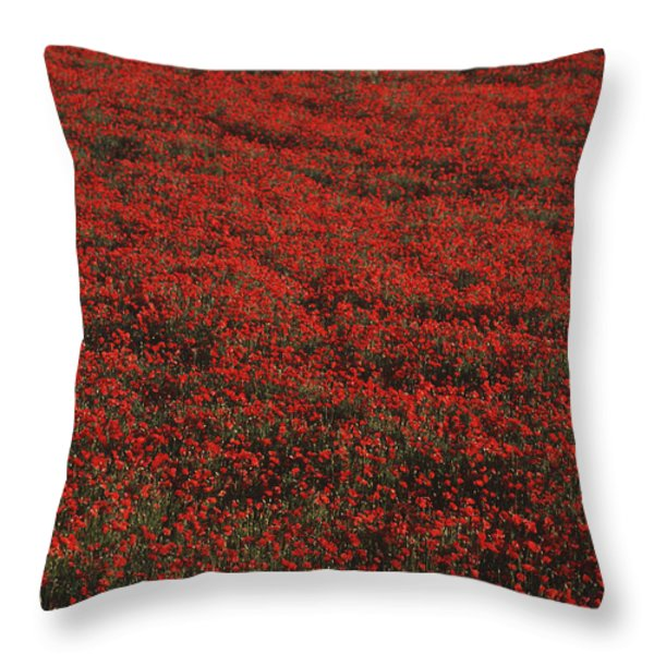 Field Of Red Poppies Throw Pillow by Ian Cumming