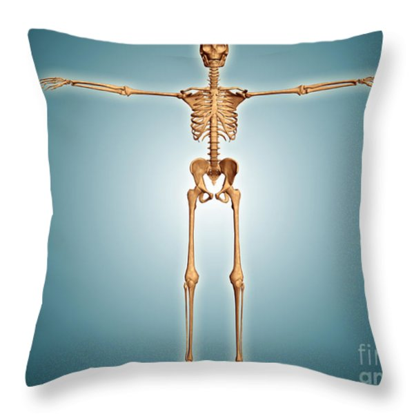 Front View Of Human Skeletal System Throw Pillow by Stocktrek Images
