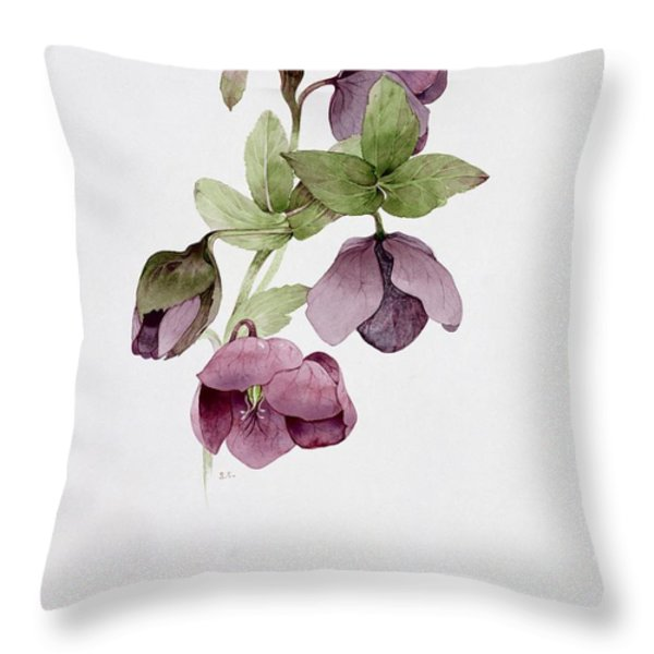 Helleborus Atrorubens Throw Pillow by Sarah Creswell