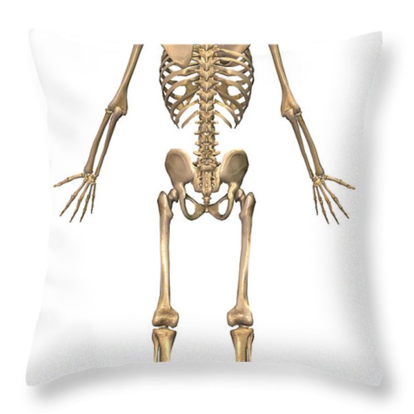 Human Skeletal System, Back View Throw Pillow by Stocktrek Images