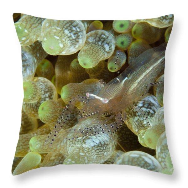 Ornate Anemone Shrimp In Anemone Throw Pillow by Steve Jones