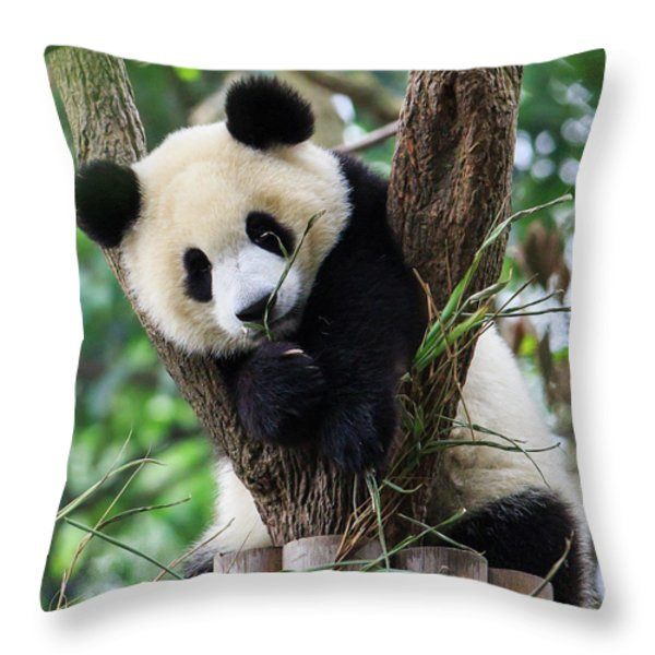 Resting Throw Pillows For Sale
