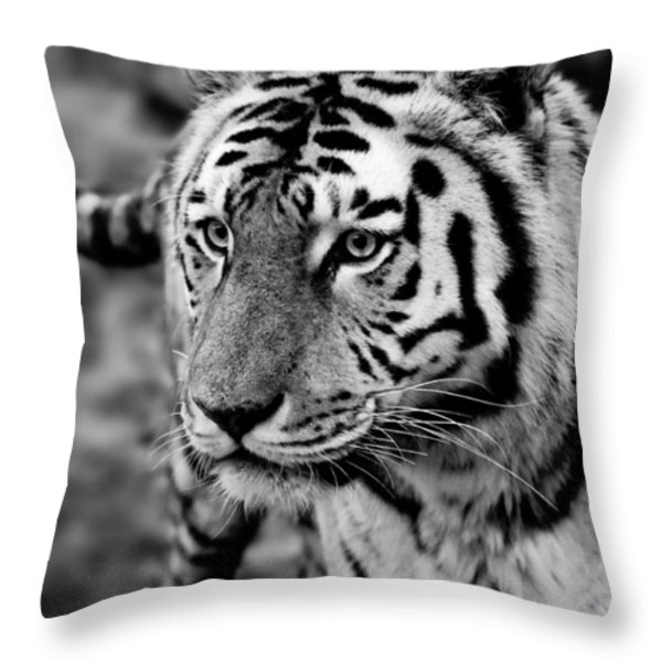Siberian Tiger Monochrome Throw Pillow by Semmick Photo