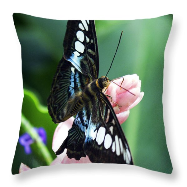Swallowtail Butterfly Throw Pillow by Marilyn Hunt