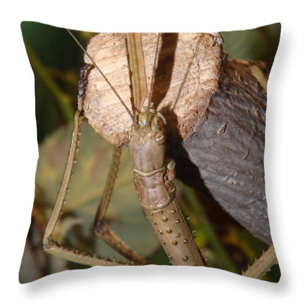The Walking Stick Throw Pillow by Sara  Raber