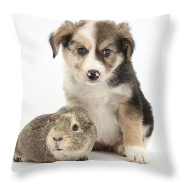 Border Collie Pup And Guinea Pig Throw Pillow by Mark Taylor