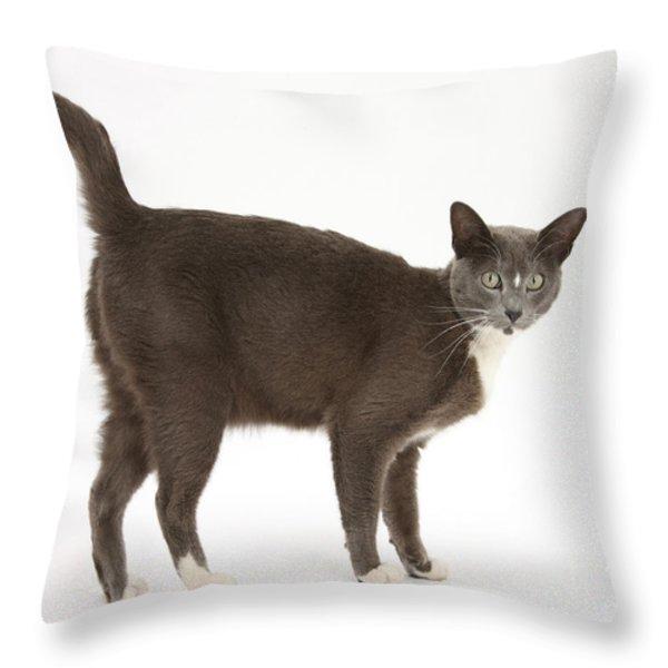Burmese-cross Cat Throw Pillow by Mark Taylor