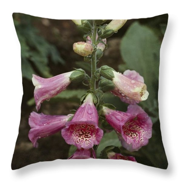 Close View Of Blooming Foxglove Throw Pillow by Sam Abell