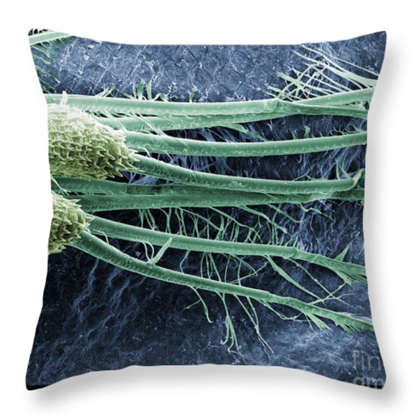 Daphnia Magna, Sem Throw Pillow by Ted Kinsman