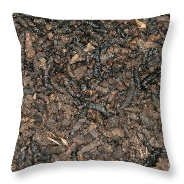 Guano Throw Pillow by Ted Kinsman