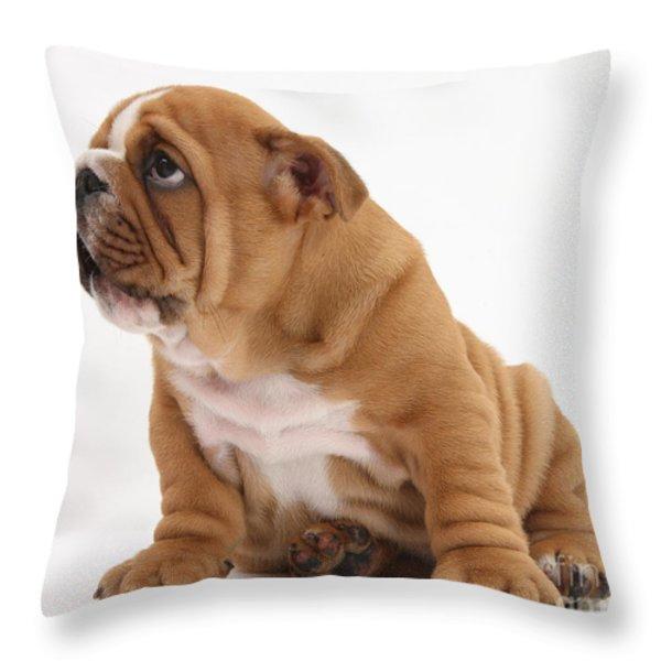 Shy Bulldog Pup Throw Pillow by Mark Taylor