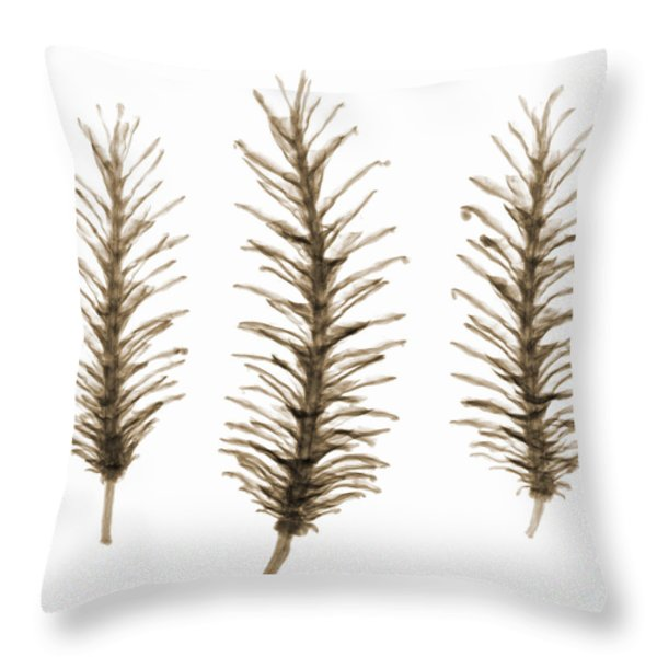 X-ray Of Pine Cones Throw Pillow by Ted Kinsman