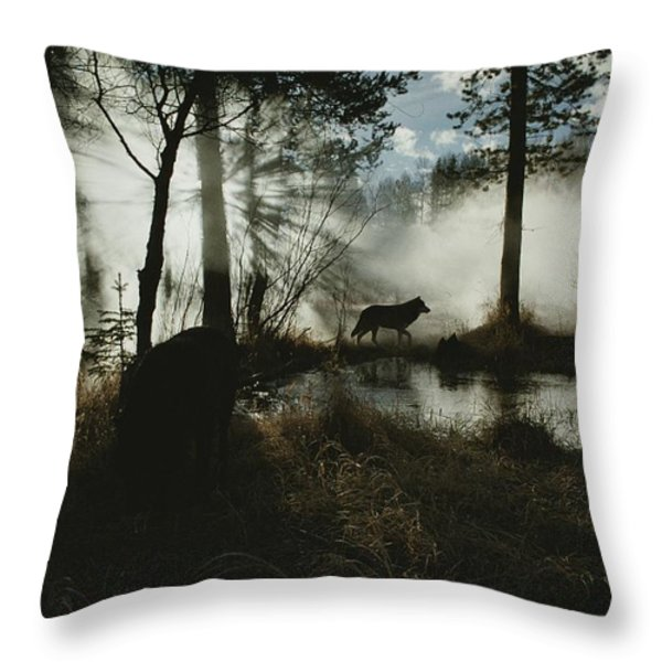 A Gray Wolf, Canis Lupus, In Silhouette Throw Pillow by Jim And Jamie Dutcher