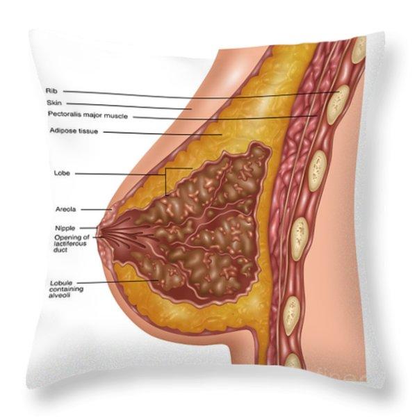 Glandular Tissue Throw Pillows Fine Art America