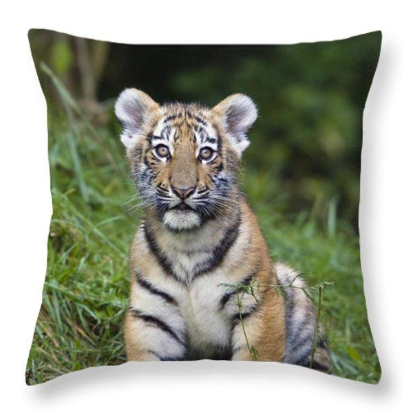 Siberian Tiger Panthera Tigris Altaica Throw Pillow by Konrad Wothe