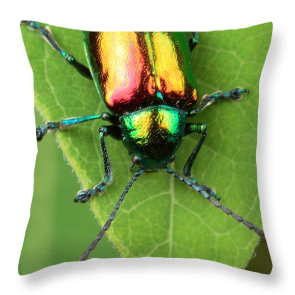 A Dogbane Leaf Beetle, Throw Pillow by George Grall