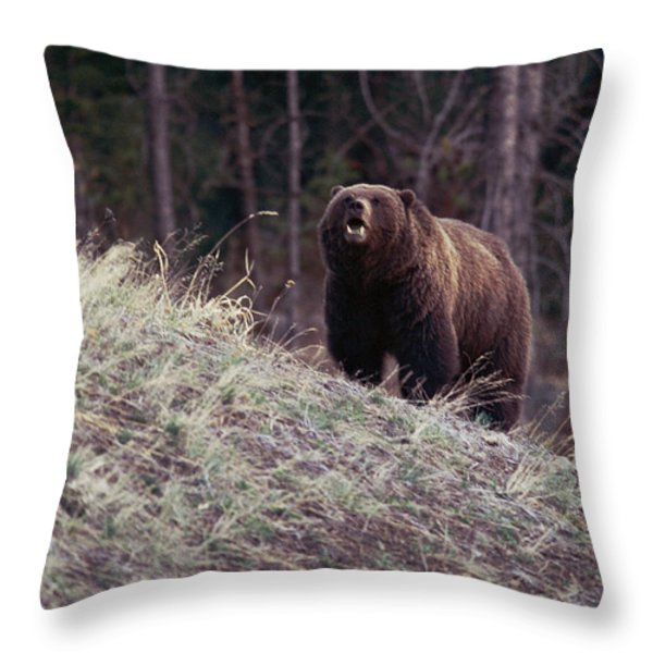 A Grizzly Bear Approaching The Crest Throw Pillow by Bobby Model