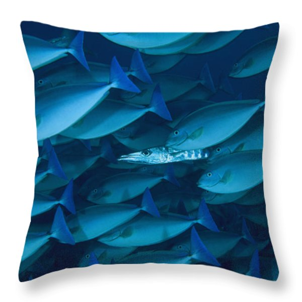 A Lone Barracuda In A School Throw Pillow by David Doubilet