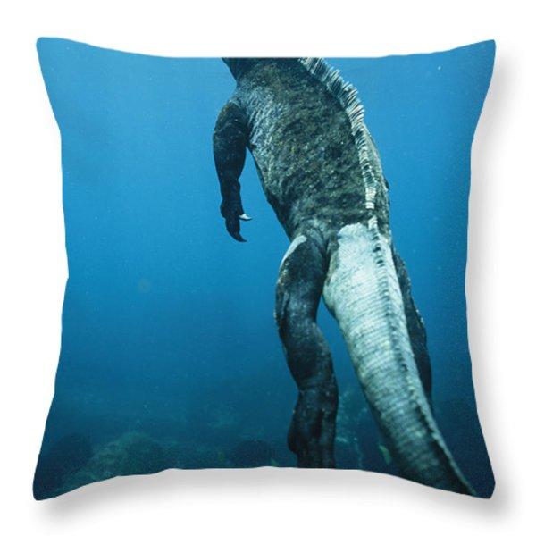 A Marine Iguana Swims Underwater Throw Pillow by Nick Caloyianis