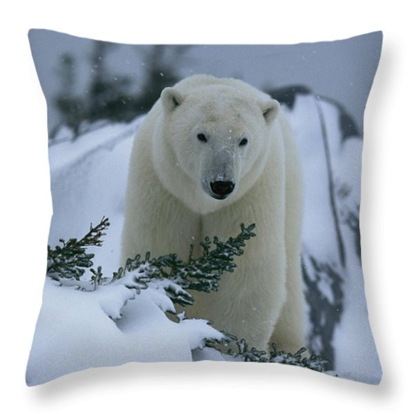A Polar Bear In A Snowy, Twilit Throw Pillow by Norbert Rosing